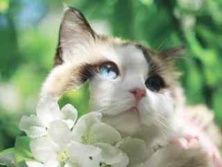 花丛中的可爱猫咪