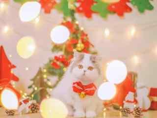 可爱圣诞猫咪图片
