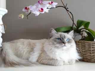 超可爱的猫咪图片
