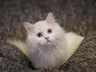 超可爱的小猫咪桌