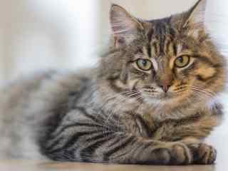 可爱的猫咪摄影图