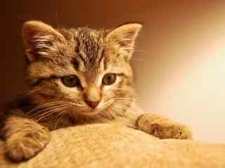 精选软萌可爱猫咪