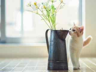 可爱萌宠猫咪图片