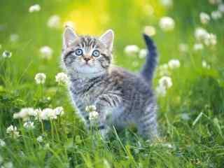 可爱软萌小猫咪高