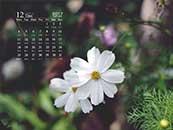 12月綠色護眼小雛菊高清圖片日歷壁紙