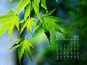 12月綠色護眼樹葉高清日歷壁紙