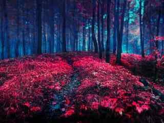 唯美另类红色森林