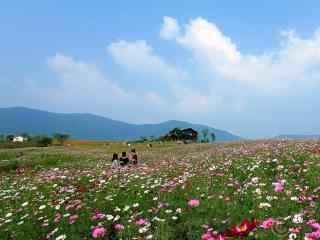 安徽巢湖花海风景壁纸