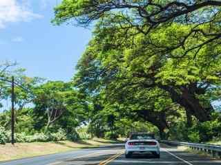 绿色清新夏威夷风