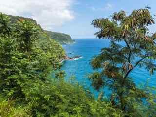 清新绿色夏威夷风
