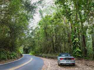 绿色夏威夷森林风