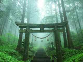 动漫萤火之森绿色森林桌面壁纸