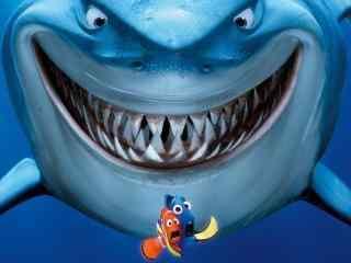小丑鱼玛林与多莉遇到鲨鱼图片