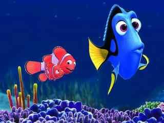 海底总动员小丑鱼尼莫玛林与多莉桌面壁纸
