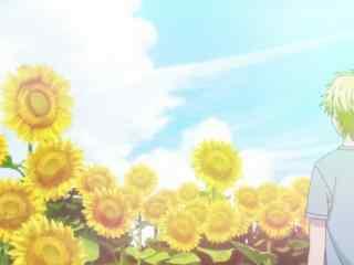 独占我的英雄向日葵的面朝支仓麻也