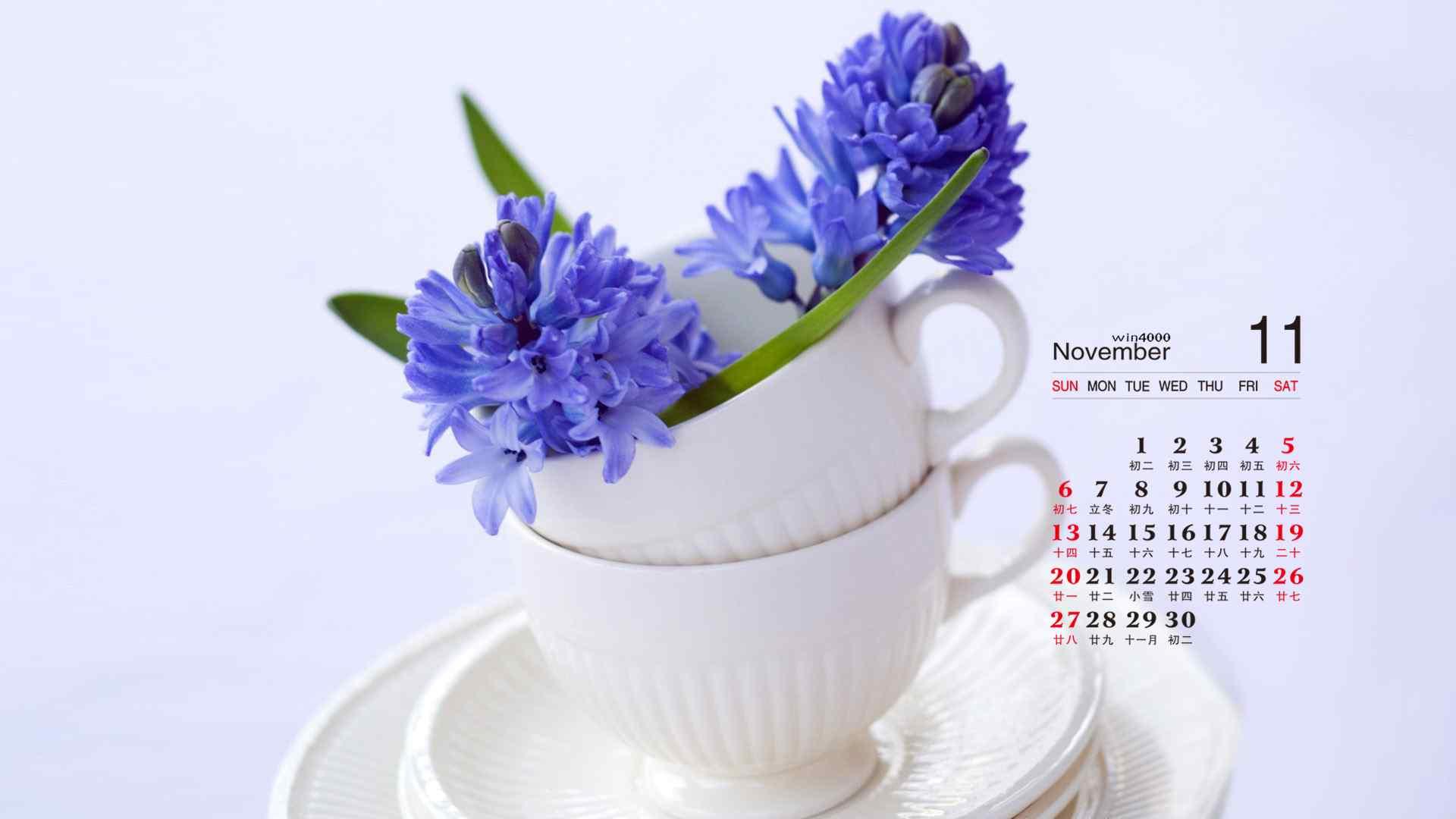 2016年11月日历好看的室内花卉植物摄影高清电脑桌面壁纸