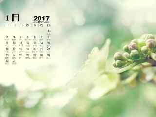2017年1月日历小清新护眼植物桌面壁纸