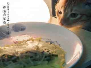 立春节气壁纸之特色美食与小猫咪图片