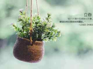 立春节气壁纸之小清新绿色盆栽