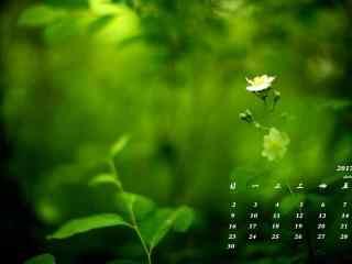 2017年4月日历小清新绿色植物护眼壁纸