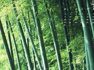 2017年4月日历唯美竹林风景护眼壁纸
