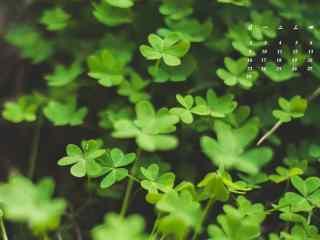 2017年4月日历绿色植物护眼壁纸