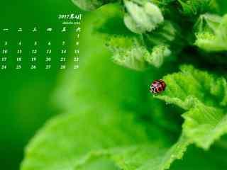 2017年4月日历绿色植物与瓢虫护眼壁纸