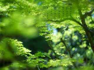 2017年5月绿色树林护眼日历壁纸