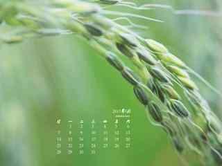 2017年5月小清新绿色麦穗护眼日历壁纸