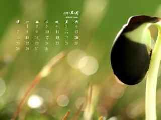 2017年5月绿色豆芽菜护眼日历壁纸
