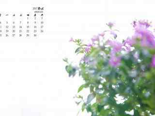 2017年6月日历盆栽唯美鲜花壁纸