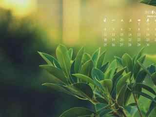 2017年6月日历清新绿色植物壁纸