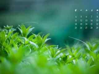 2017年6月日历绿色唯美桌面壁纸