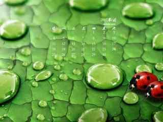 2017年6月日历绿色树叶与瓢虫护眼壁纸