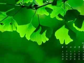 2017年6月日历清新绿色银杏桌面壁纸