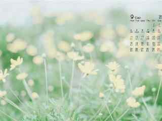 2017年9月日历小清新鲜花桌面壁纸