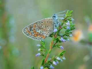 水珠与鲜花与蝴蝶