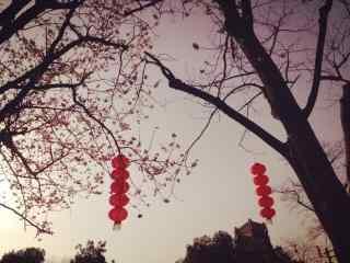 唯美意境中的大红灯笼图片