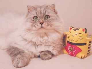 小猫咪与可爱的招