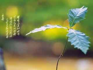 绿色嫩芽上枝头之立春节气壁纸
