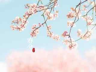 春分节气—粉色樱花花海桌面壁纸