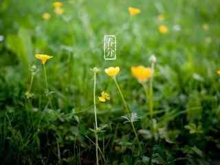 春分节气—绿色护眼小草桌面壁纸