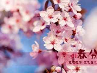 春分节气—唯美桃
