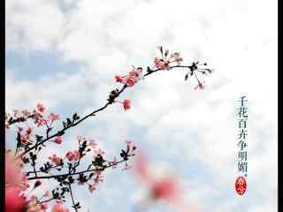 春分节气—春日桃花看满枝头桌面壁纸