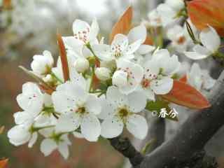 春分节气—小清新鲜花桌面壁纸
