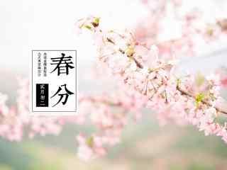 春分节气—唯美小清新桃花盛开桌面壁纸