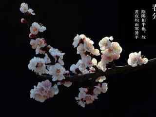 春分节气—唯美的桃花桌面壁纸