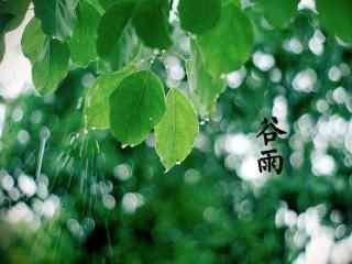 2017年谷雨节气绿色护眼壁纸