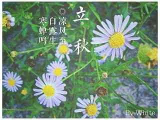 清新雏菊立秋桌面壁纸