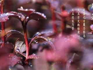 二十四节气处暑植物唯美壁纸